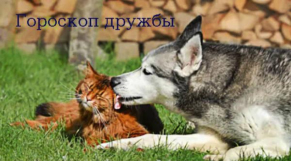 Гороскоп дружбы