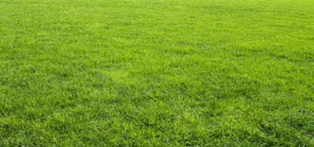 Трава во сне
