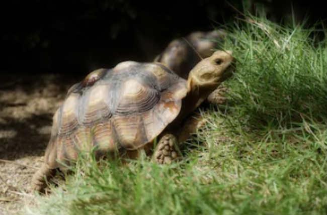 Черепаха во сне