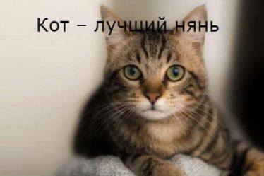 Кот – лучший нянь