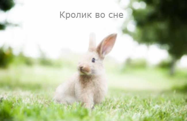 Кролик во сне