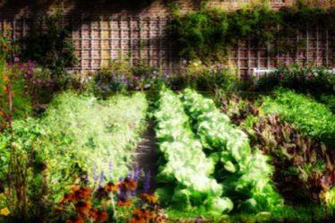 Огород во сне